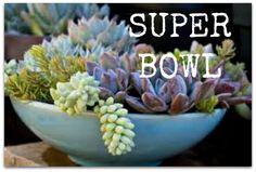 Super Bowl for GARDENERS! ✿✿✿