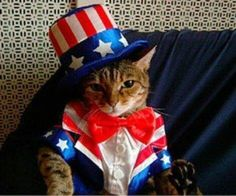 PetsLady's Pick: Cute Patriotic Cat Bonus Pic Of The Day ... see more at PetsLady.com ... The FUN site for Animal Lovers