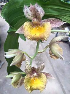 Flower World. - Comunidad - Google+