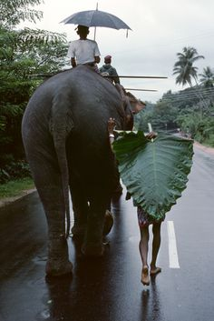 Sri Lanka: ride elephants through the jungle like it aint no thang