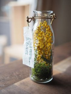 Dried flowers in a bottle Do you know you may maintain mimosa with out water. The yellow balls dry however stay ornamental. Hyacinth Flowers, Green Flowers, Dry Flowers, Deco Floral, Arte Floral, Mimosas, Ikebana, Le Mimosa, Diy Fleur