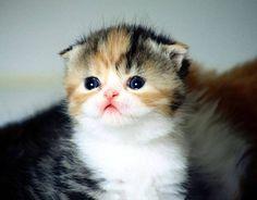 The Absolute Cutest Animal Pics of 2016 - Thus Far - Ausom Pets