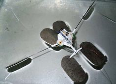 Water Strider Insect Inspires Water-Hopping Robot