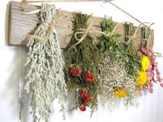 Gardening Herb Drying Herbs: 4 Easy Methods to Preserve Your Herb Garden Harvest - Do you grow a herb garden? Then you must preserve your herb harvest so you can use them later. Here are 4 drying herbs methods you should try. Herb Rack, Herb Drying Racks, Dried Flower Arrangements, Dried Flowers, Types Of Herbs, Growing Herbs, Easy Diy Crafts, Flower Wall, Diy Projects