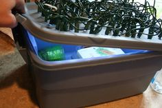 cheap LED light and grow box for seedlings