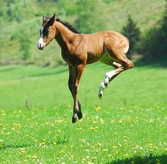 Frisky foal