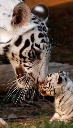 18 Cutest Animal Pictures Around the animals The Animals, My Animal, Baby Animals, Funny Animals, Animals Planet, Wild Animals, Cutest Animals, Animals With Their Babies, Nature Animals
