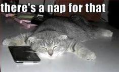 I need a nap - funny nap quotes and memes Funny Couple Pictures, Funny Cartoon Pictures, Funny Dogs, I Love Cats, Cute Cats, Cat App, I Need A Nap, Lazy Humor, Animaux
