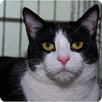 Adopt A Pet :: Moira - New York, NY