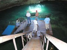 diving gainesville florida | Devil's Den Sinkhole for Diving into the Aquifer | Sinkhole Report Gainesville Florida, State Of Florida, Florida Girl, Before I Die, Diving, Places Ive Been, Den, Stairs, Beautiful
