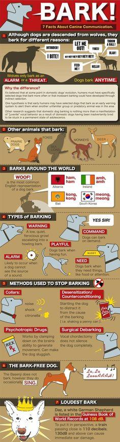 Dog bark infographic http://dogcoachinggenius.com/category/dog-training-tips/