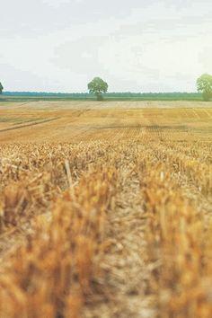 Farm Fall Field Nature Yellow Flare iPhone 4s wallpaper