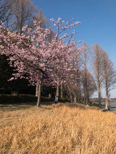https://flic.kr/p/St8H9J | 佐鳴湖 | Sanaruko Lake