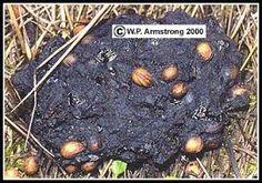 Resultado de imagem para seed dispersal