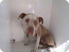 EMERGENCY... SHARE THIS SWEETHEART PLEASE....  BLIND/ VISION ISSUES AND WILL BE KILLED ANYTIME.  PLEASE SHARE NOW ........ TOMORROW WILL BE TOO LATE.  www.facebook.com/photo.php?fbid=376837729113304&set=a.118132861650460.19466.100003612410268&type=1&ref=nf