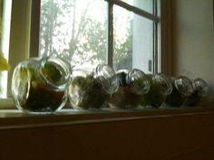 Adorable bird spice jar terrariums (more pics)