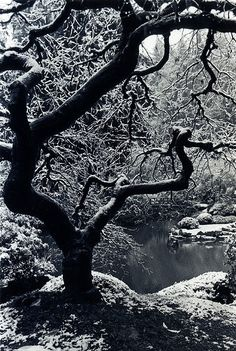 Winter in Portland Japanese Garden, Oregon - One of my favorite places in Portland!