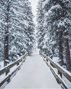 Winter Wonderland via @kylehouck  Black Friday Sale is still going strong. Thanks to all of those who have supported our small business today! #forgeyourownpath