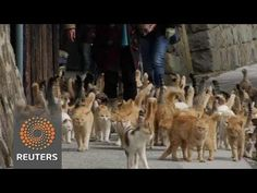 Vacation Spot of the Day: Tourists are Flocking to Japan's Cat Island - The Daily What