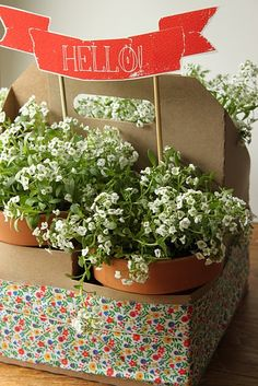Flower pots in a carrrier--DIY-- this is an upcycled drink caddy--download Hello banner
