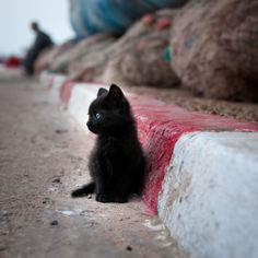 Tiny black kitten by the curb