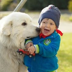 Chien et enfant : quel chien choisir ?