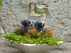 Near-black Aeonium 'Zwartkop' dominates the center of the planter, flanked by bronzy Sedum nussbaumerianum, and skirted with the delicate te...