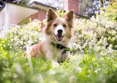 Border Collie - Melbourne Dog Photography - Yarra Valley