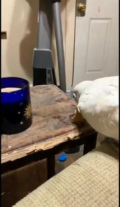 Love Birds Pet, Cute Birds, Love Pet, Funny Dog Videos, Funny Animal Memes, Cute Little Animals, Cute Funny Animals, Beautiful Birds, Animals Beautiful