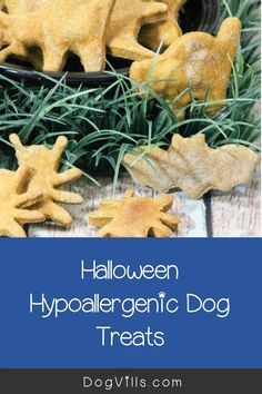 You already have your pup on the best hypoallergenic dog food, but finding great hypoallergenic dog treats can seem a little daunting at times. Halloween Cookie Cutters, Halloween Cookies, Fall Recipes, Dog Food Recipes, Hypoallergenic Dog Treats, Best Dog Food, Pup, Pumpkin, Times
