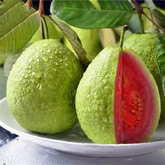 Buy Red Guava Fruit Tree Seeds Plant Fruit Psidium Guajava Grow Fan Shi Liu - All About Gardens Guava Fruit Tree, Bonsai Fruit Tree, Trees To Plant, Pink Fruit, Cherry Seeds, Fruit Seeds, Tomato Seeds, Fruit And Veg, Fruits And Vegetables