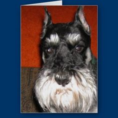Shop Schnauzer Note Card created by gramabarb. Schnauzer Art, Custom Cards, Puppy Love, Note Cards, Cute Animals, Notes, Puppies, Schnauzers, Personalized Cards