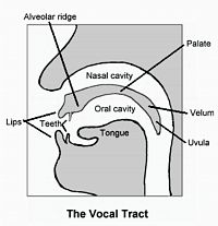 Teaching the /L/ sound -  Pinned by @PediaStaff – Please Visit http://ht.ly/63sNt for all our pediatric therapy pins