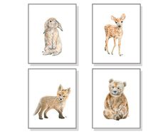 Woodland Animal Fine Art Print Set created from Our Original Watercolor Paintings: Bear, Deer, Fox and Bunny. Perfect for any age (child, baby, adult) and gender (girl or boy).  This is a unique Set of 4 Fine Art Prints available in 5x7, 8x10, 11x14, 13x19, & 16x20 inches in both horizontal (landscape) and vertical (portrait) orientation. Please select the size and orientation you would like. The James River Studios Watermark on the pictures will not appear on your prints.  They are all…