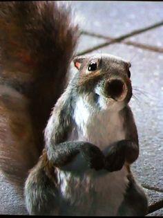 totem squirrel