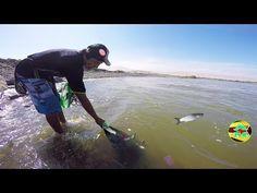 Pesca Con Atarraya Lisas De Rio