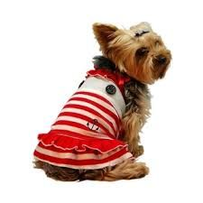 Image result for pet dress