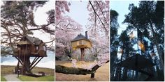 7 meravigliose case sull'albero / 7 weird and wonderful tree houses