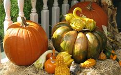 Feng Shui Tip ~ for Good Health   ~ Get Your Gourds! This is a great time to start collecting gourds to stay healthy during the winter season. For the remainder of this year, according to Flying Stars Feng Shui, place gourds in the Northwest area of your home, bedroom, or office. Gourds absorb negativity, stress, and illness that is prominent in this location. ∞ Improve YOUR feng shui by adding even one or two gourds to this part of your space and notice the effect.