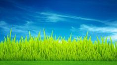 Simple Grass by WenManuree