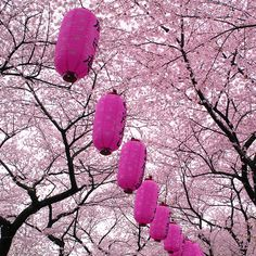 japanese lanterns and cherry blossom