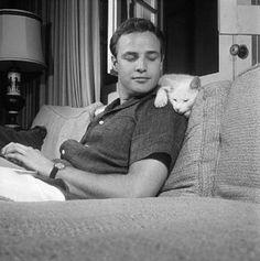 Marlon Brando (that's not Paul Newman) loved cats.