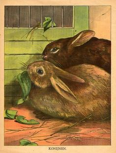 Antique Print Rabbit Rodent 1925 | eBay