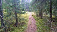 Aulanko puistometsä, Hämeenlinna Country Roads, Plants, Classroom, Planters, Plant, Planting