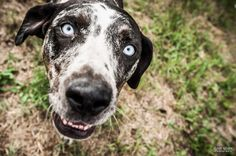 a dog with crazy eyes in Kamloops, British Columbia, Canada