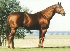 Streakin Six(1966)Easy Six- Miss Assured By Little Request. 19 Starts 10 Wins 5 Seconds 1 Third. $473,937. Won Rainbow Futurity, 2nd All American Futurity. Died In 2005.