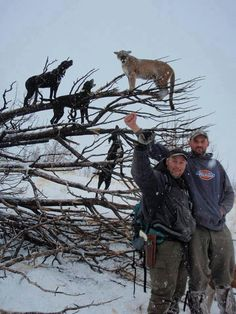 They pose proudly infront of a terrified animal that could easily lash out to kill. All it takes is one swipe of the cougars paw and the hound is dead. Stupid men.
