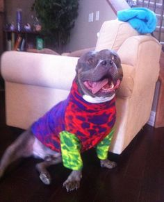Here is Titus - a 90lb Pitty - wearing size large - FatHead K9 Fleece