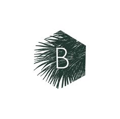 Bija Botanicals logo design wip from extrafin design