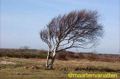 Na de bladval kunnen we genieten van de silhouetten van bomen en ons verwonderen waarom die boom op die plaats zo gevormd is.